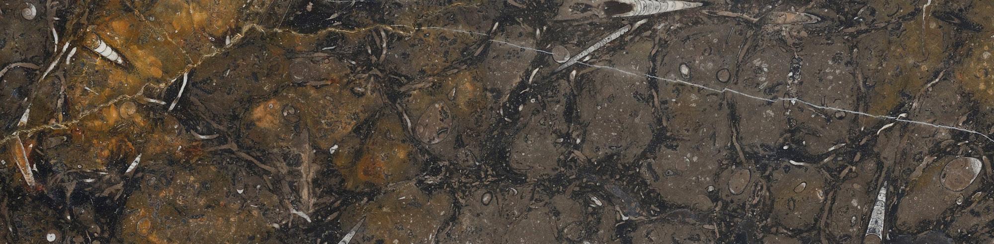 Amonite Etrusco